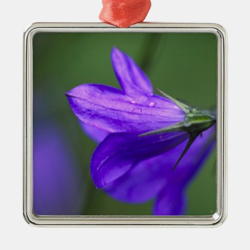 Bluebell flower in Independence Pass in Christmas Tree Ornaments