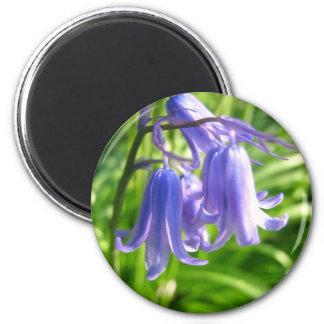 Bluebell flowers - Magnet