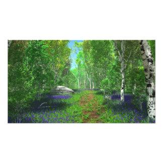 Bluebell Light Photo Print
