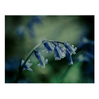 Bluebell post card
