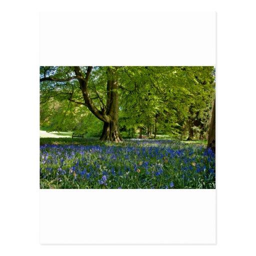 Bluebell Spring Postcard