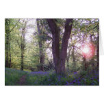Bluebell Walk Greeting Card