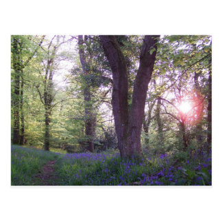 Bluebell Walk Postcard