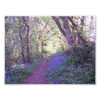 Bluebell Wood Photo Print