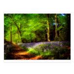 Bluebell wood postcard