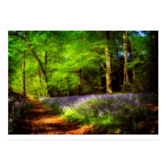 Bluebell wood postcard