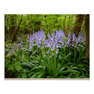 BLUEBELL WOOD ~ Poster # 9