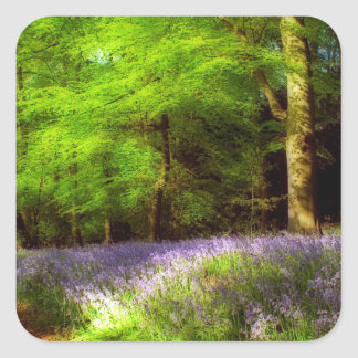 Bluebell wood square stickers