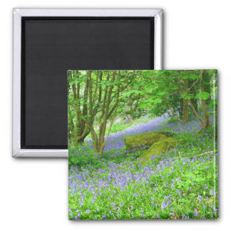 Bluebell Woods 2 Inch Square Magnet