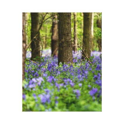 Canvas Prints | Bluebell Woods