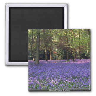 Bluebell Woods, England 2 Inch Square Magnet