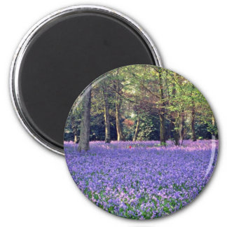 Bluebell Woods, England  flowers 2 Inch Round Magnet
