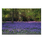 Bluebell Woods, England Poster