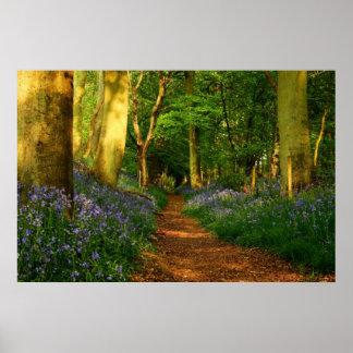 Bluebell Woods Poster