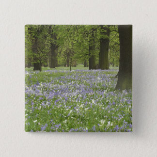 Bluebells and Oak Trees in Spring, Little Hagley Button