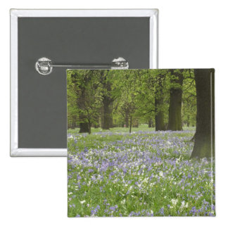 Bluebells and Oak Trees in Spring, Little Hagley 2 Inch Square Button