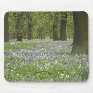 Bluebells and Oak Trees in Spring, Little Hagley Mouse Pad