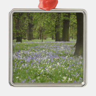 Bluebells and Oak Trees in Spring, Little Hagley Christmas Tree Ornaments