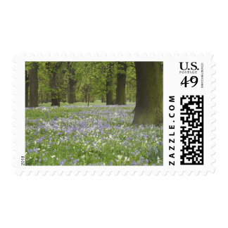 Bluebells and Oak Trees in Spring, Little Hagley Stamp