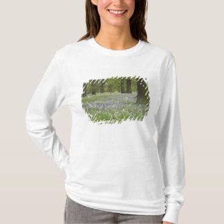 Bluebells and Oak Trees in Spring, Little Hagley T-Shirt