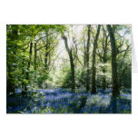 Bluebells and spring sunbeams