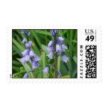 Bluebells at Graeme Park Stamp
