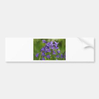 bluebells bumper sticker