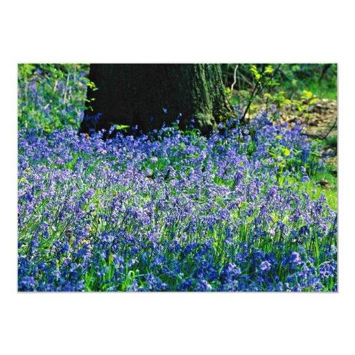 Bluebells, Crackley Wood, Kenilworth, Warks  flowe Personalized Invite