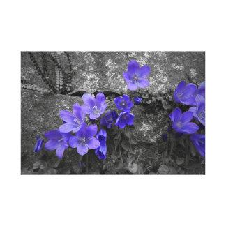 Bluebells en la cerca de la roca lienzo envuelto para galerías
