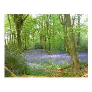 Bluebells en maderas postal