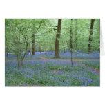 Bluebells en una madera tarjeton