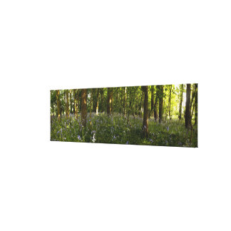 Bluebells In A Forest Canvas Print