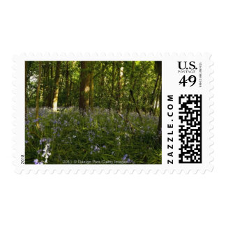 Bluebells In A Forest Postage