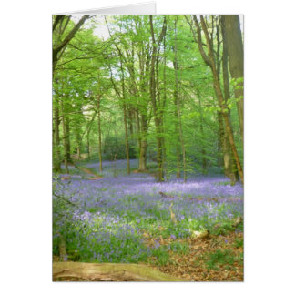 Bluebells in Woods Card