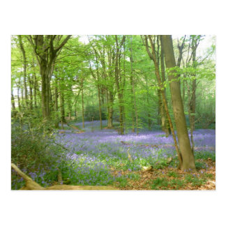 Bluebells in Woods Postcard