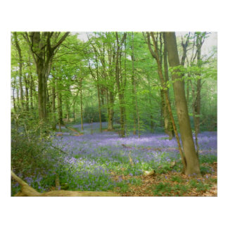 Bluebells in Woods Poster