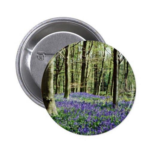 Bluebells, parque de Blicking, Blicking, flowe de  Pin