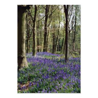 """Bluebells, parque de Blicking, Blicking, Norfolk Invitación 5"""" X 7"""""""