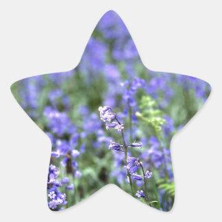 Bluebells Pegatina En Forma De Estrella