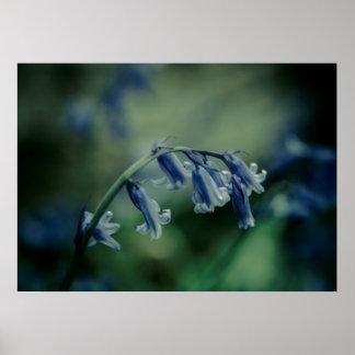 Bluebells Poster