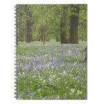 Bluebells y robles en la primavera, poco Hagley Cuadernos
