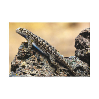 Bluebelly Lizard Canvas Print