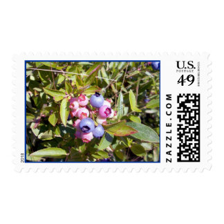 Blueberries 1 Stamp