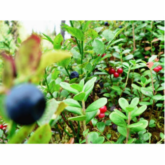 Blueberries And Lingon Berries Cut Out