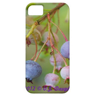Blueberries at Acadia iPhone SE/5/5s Case