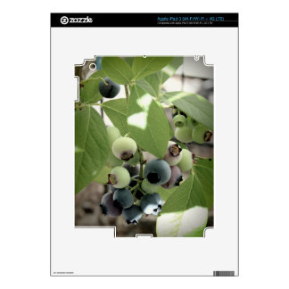 Blueberries Decals For iPad 3