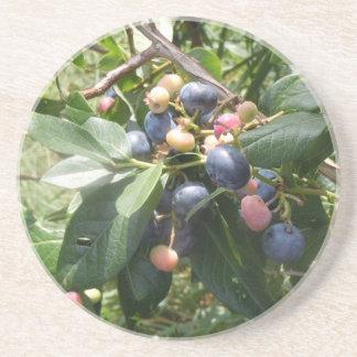 Blueberries -  Dunham, Quebec, Canada Beverage Coasters