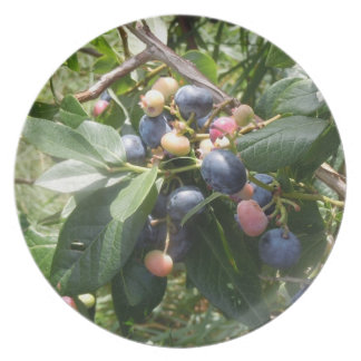 Blueberries -  Dunham, Quebec, Canada Dinner Plates