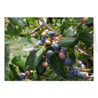 Blueberries -  Dunham, Quebec, Canada Stationery Note Card