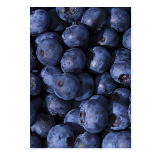Blueberries! Post Card
